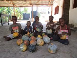 Pumpkin harvest home